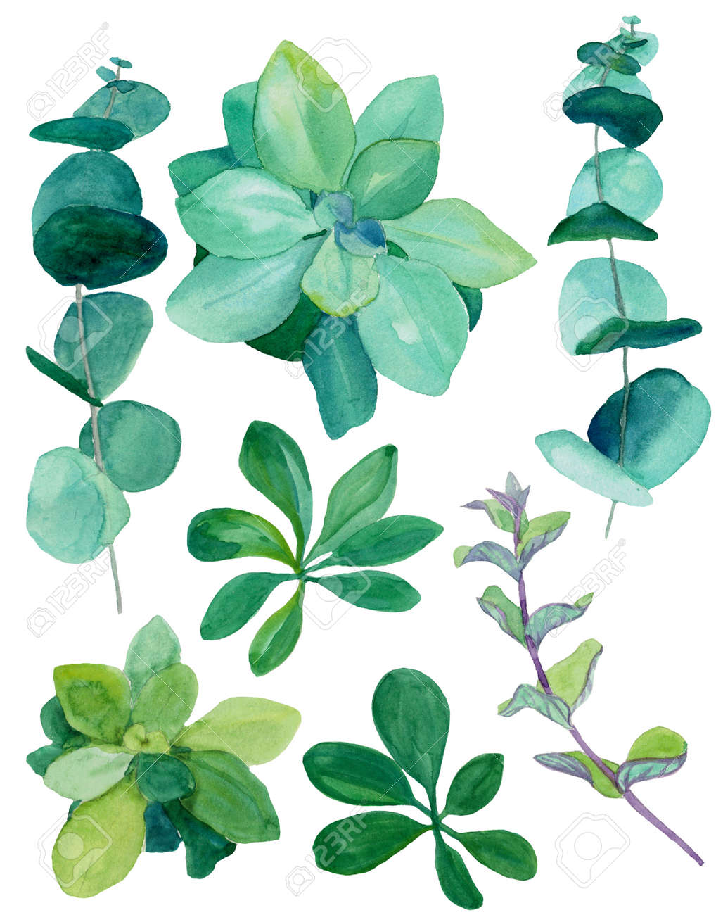 Watercolor Botanical Green Decor Set Baby Blue Eucalyptus Decorative Stock Photo Picture And Royalty Free Image Image 138888083