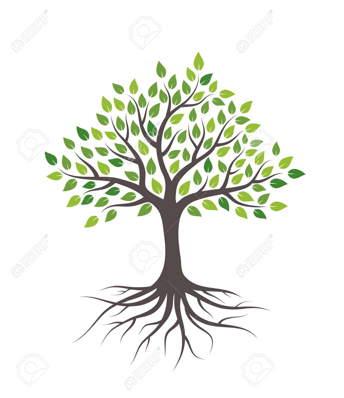 Tree with green leaves and roots. Isolated on white background. - 122587019