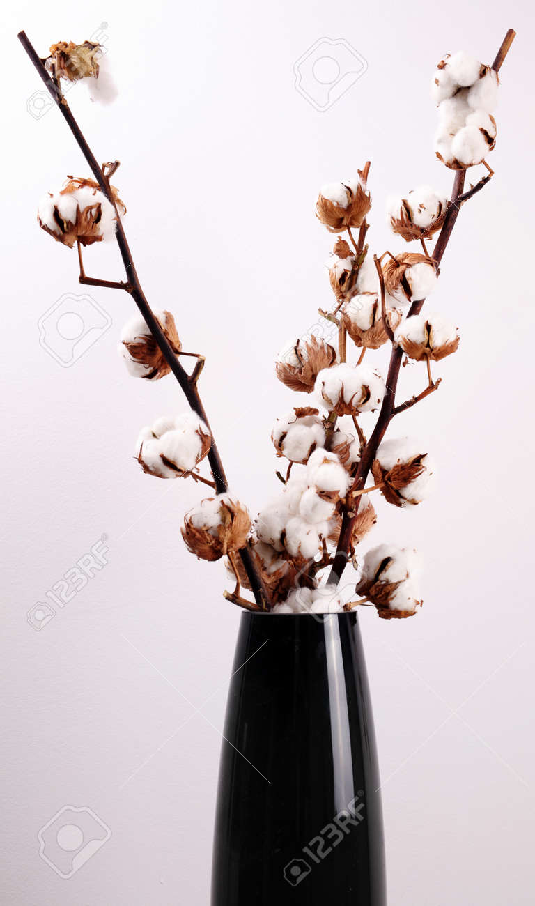 Branche Fleur De Coton cotton plant flower branch in vase. modern, cozy home decorating..