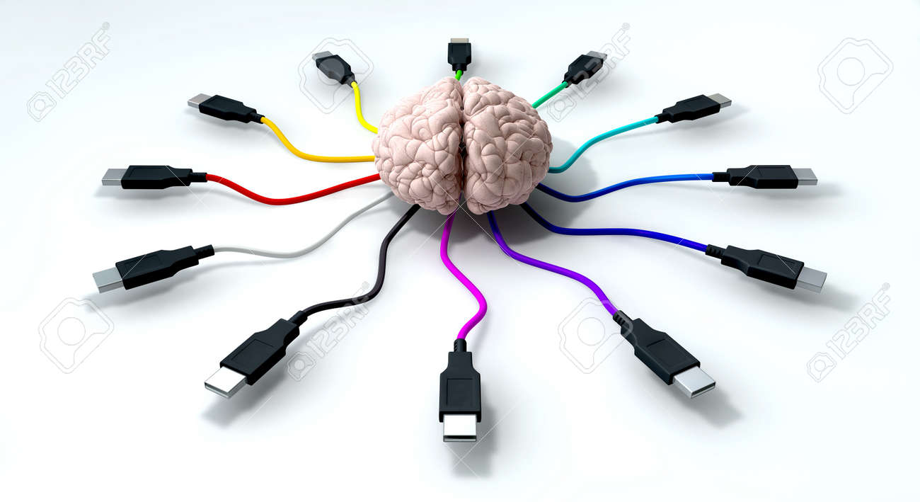 A human brain with multi-colored usb cable extending and reaching out from its center Stock Photo - 13829472