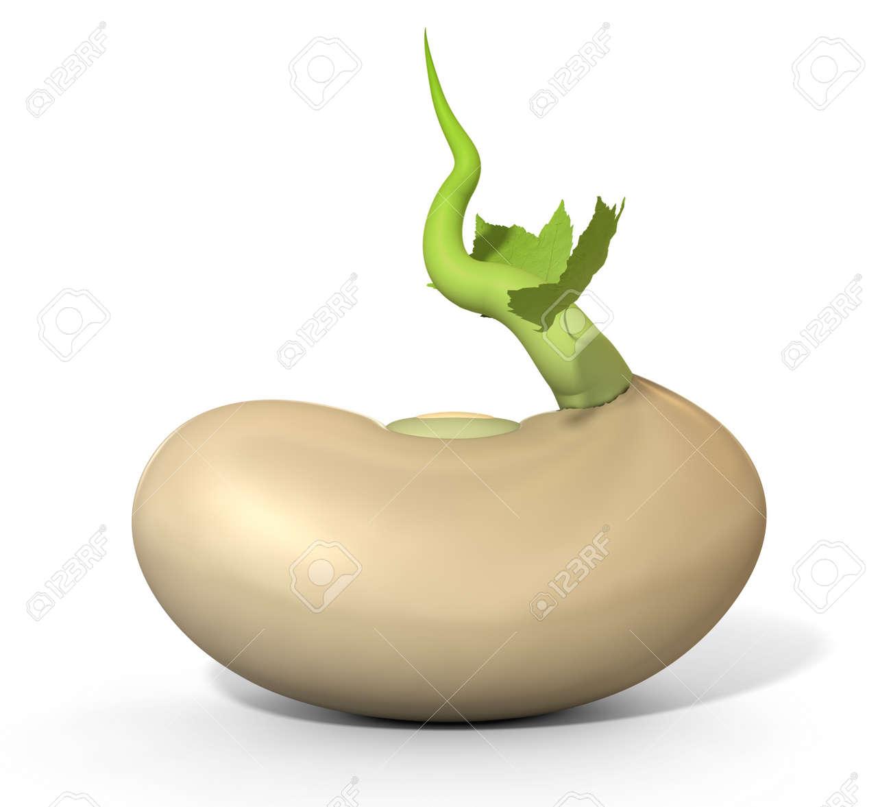 Een close up van een gewone suiker bonen kiemen een groene rank ...