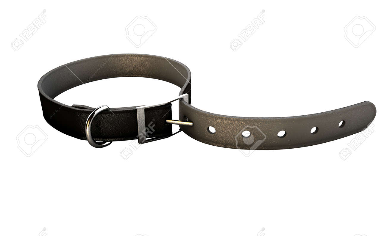 A regular leather belt that has been tightened very narrow on an isolated white studio background - 52543912