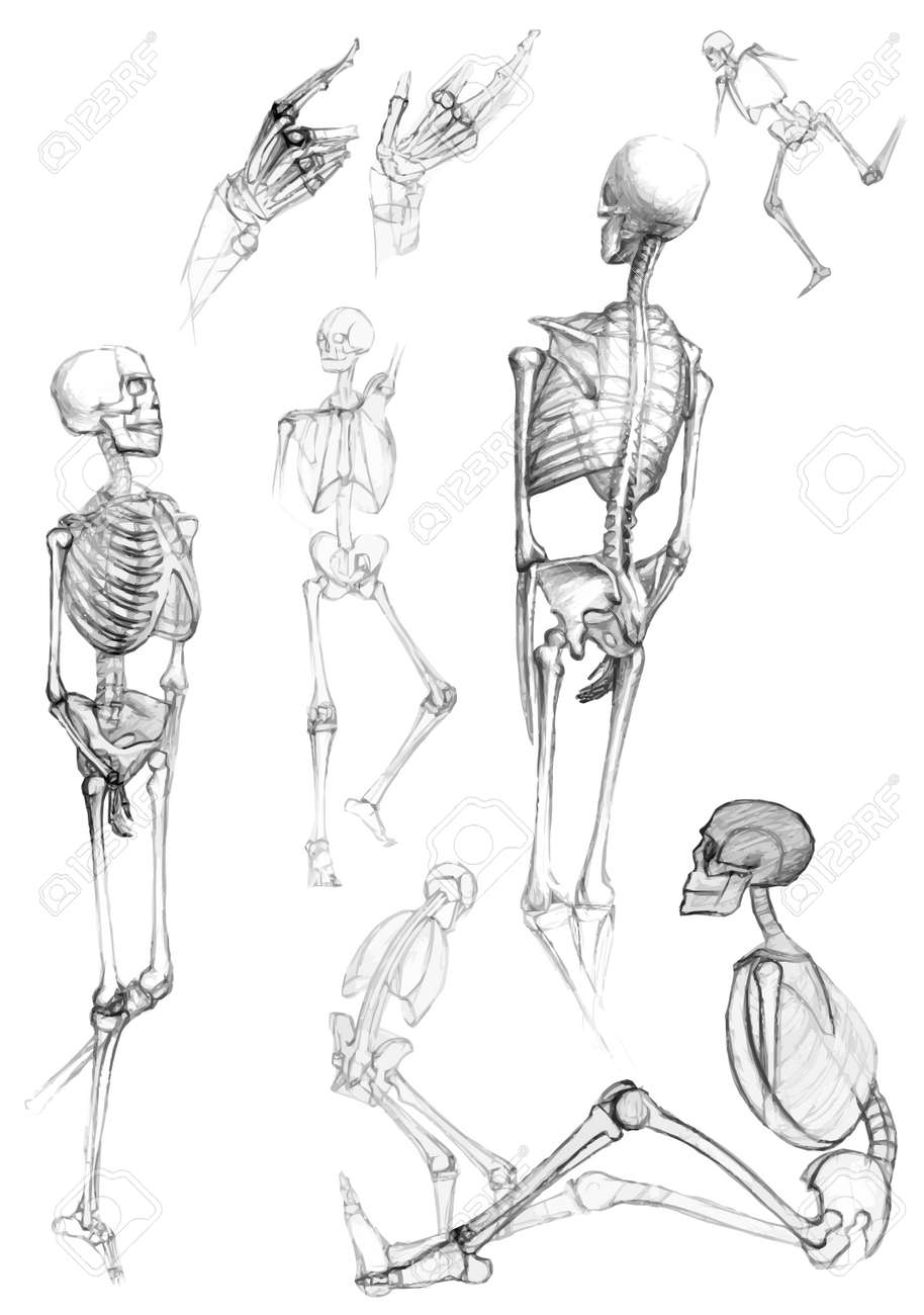 Set of isolated human body parts and skeletons in different poses,like pictured by a pencil Stock Vector - 16999081