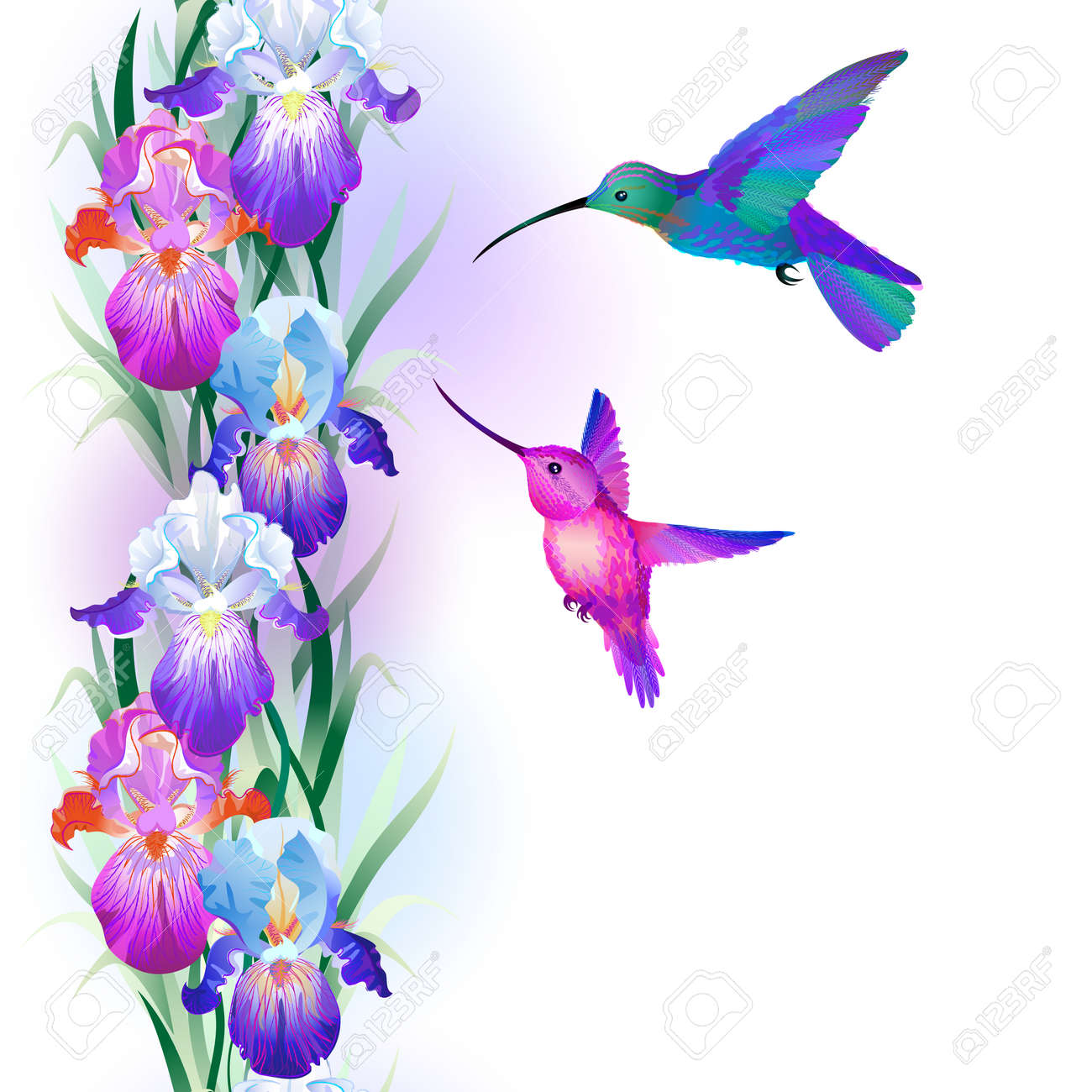 5455 iris flower stock illustrations cliparts and royalty free seamless pattern with bright multicolored iris flowers and hummingbirds pronofoot35fo Image collections