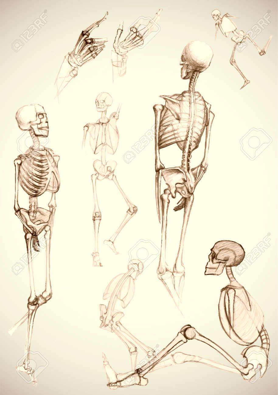 Großartig Bilder Von Menschlichen Körperteilen Bilder - Menschliche ...