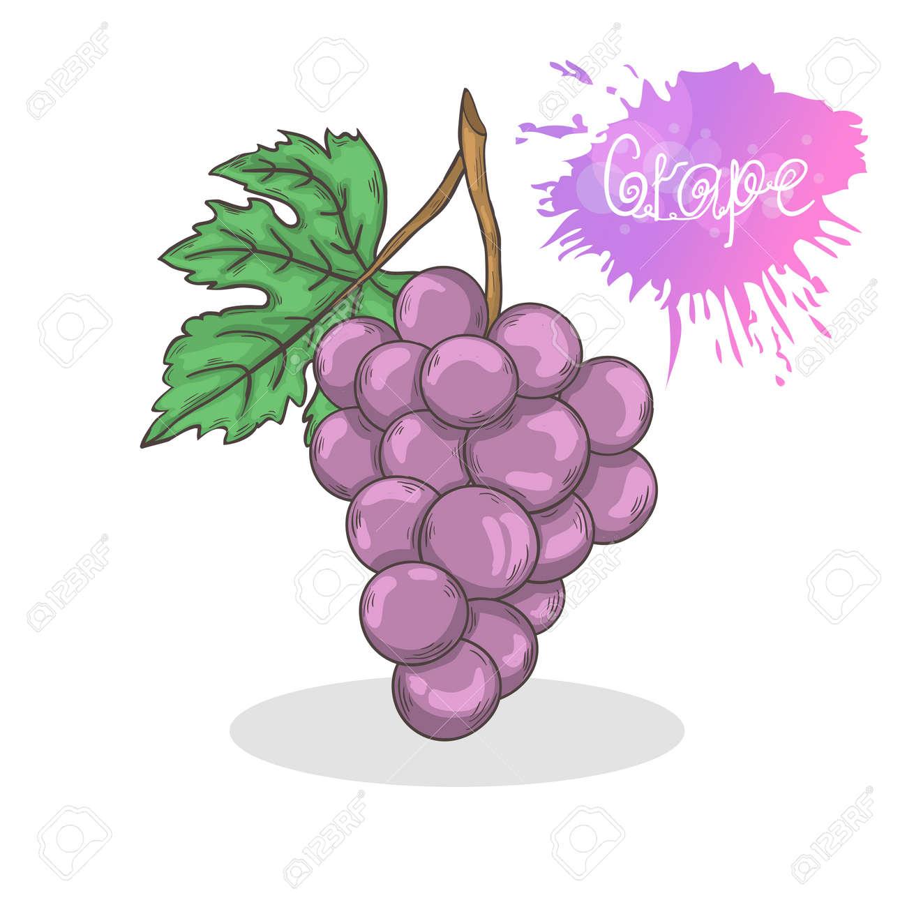 Paarse Druiven Vector Illustratie Geisoleerd Op Een Witte Background Summer Fruit Pictogram Hand Tekenen In Doodle Stijl Met Schaduw Royalty Vrije Cliparts Vectoren En Stock Illustratie Image 61457843