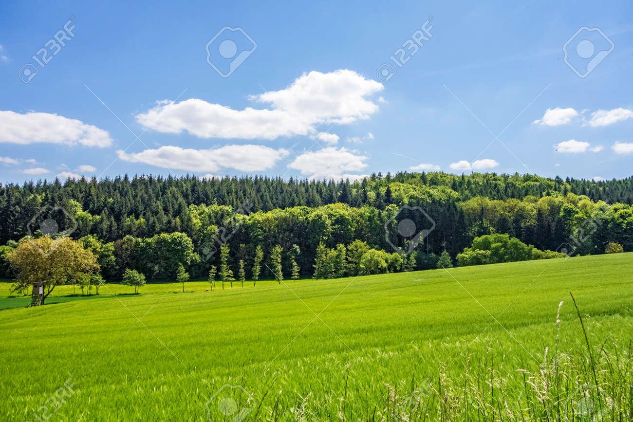 Paysage Rural Pre Vert Naturel Avec La Foret En Arriere Plan Banque D Images Et Photos Libres De Droits Image 45002003
