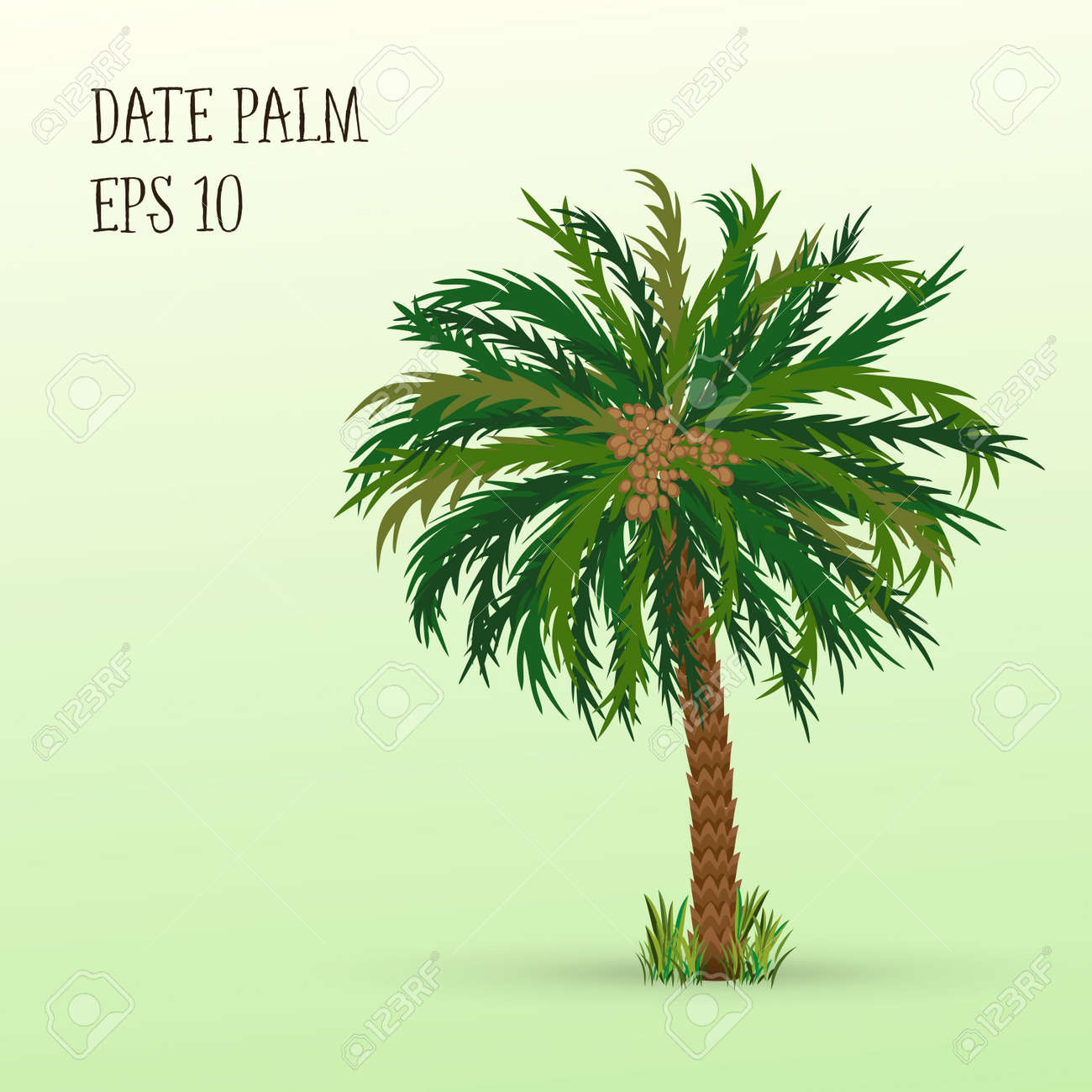Date Palm Tree With Ripe Fruits Dates Vector Illustration Eps