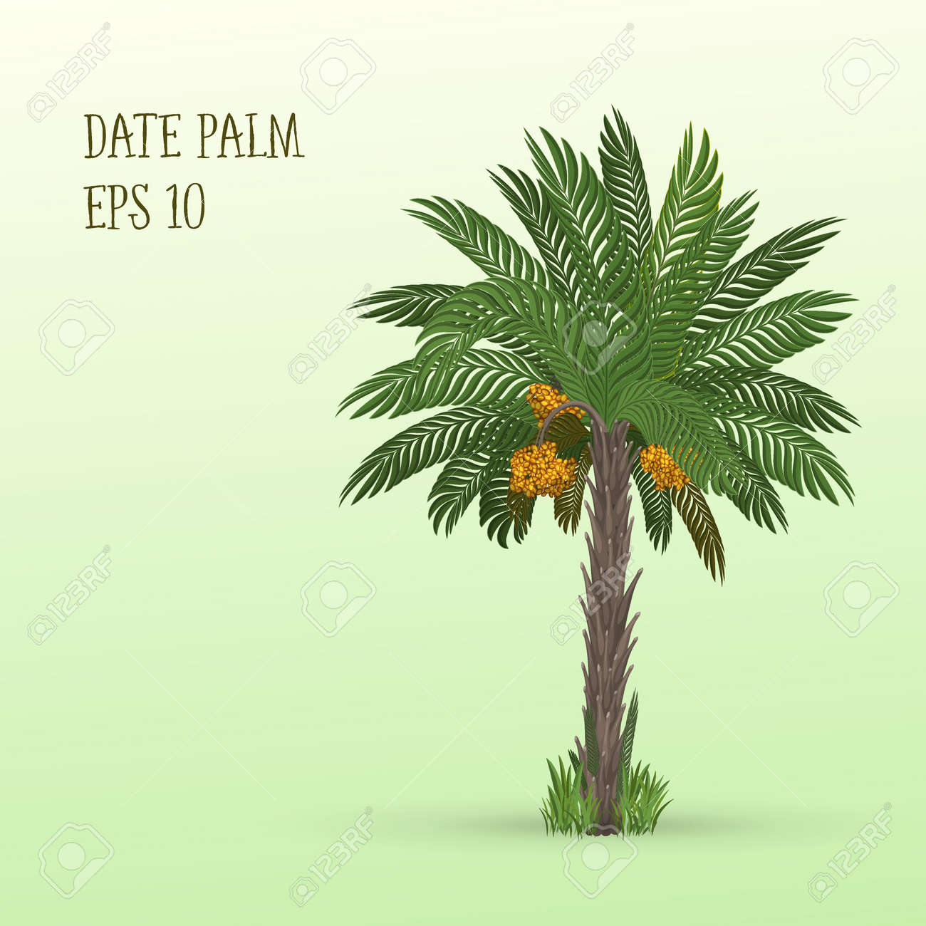 Vector Illustration Of Date Palm Tree With Ripe Fruits Dates
