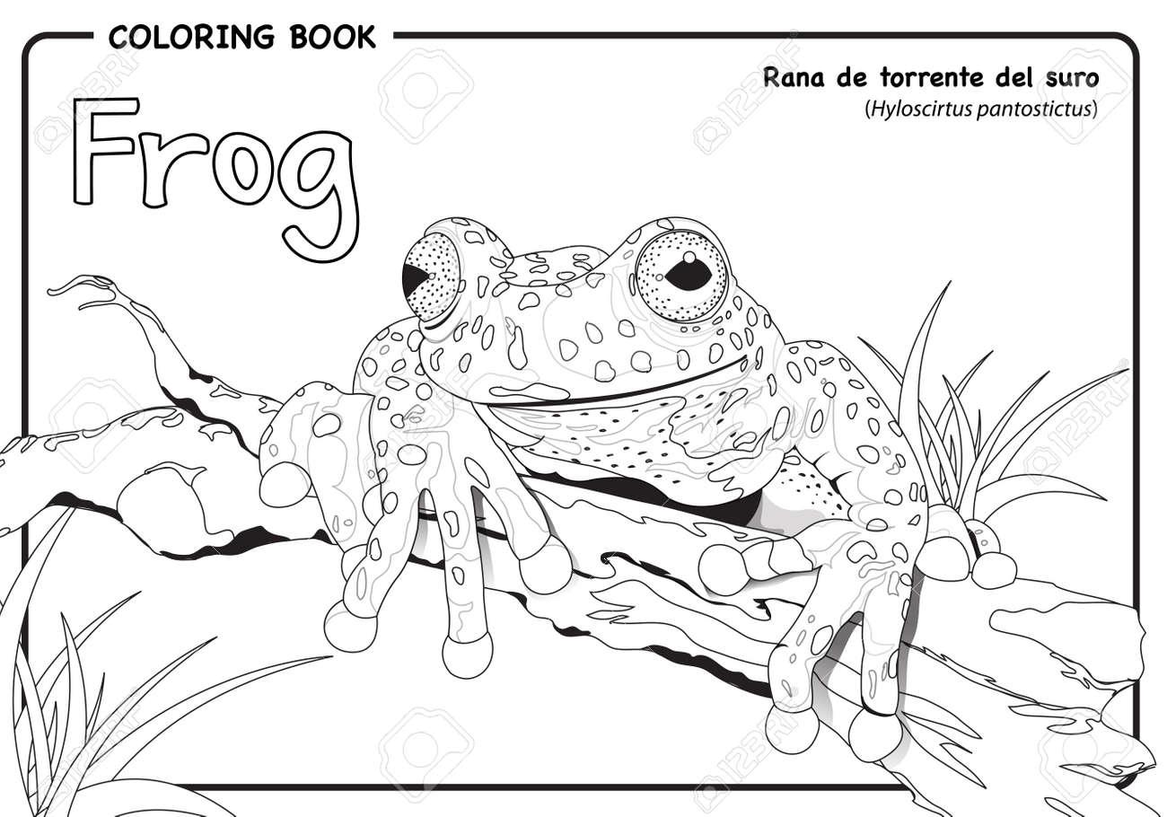 Frosch (Hyloscirtus Pantostictus) Auf Weißem Hintergrund - Malbuch ...