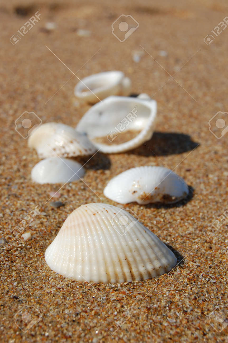 Diverse Sea Shells Collection on Sand Background on the Beach Stock Photo - 21586157