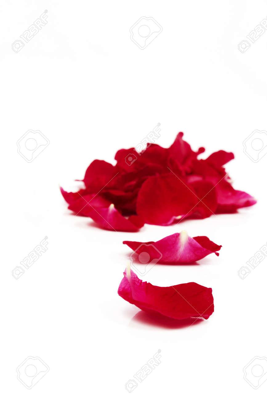 rose petals Stock Photo - 20237664
