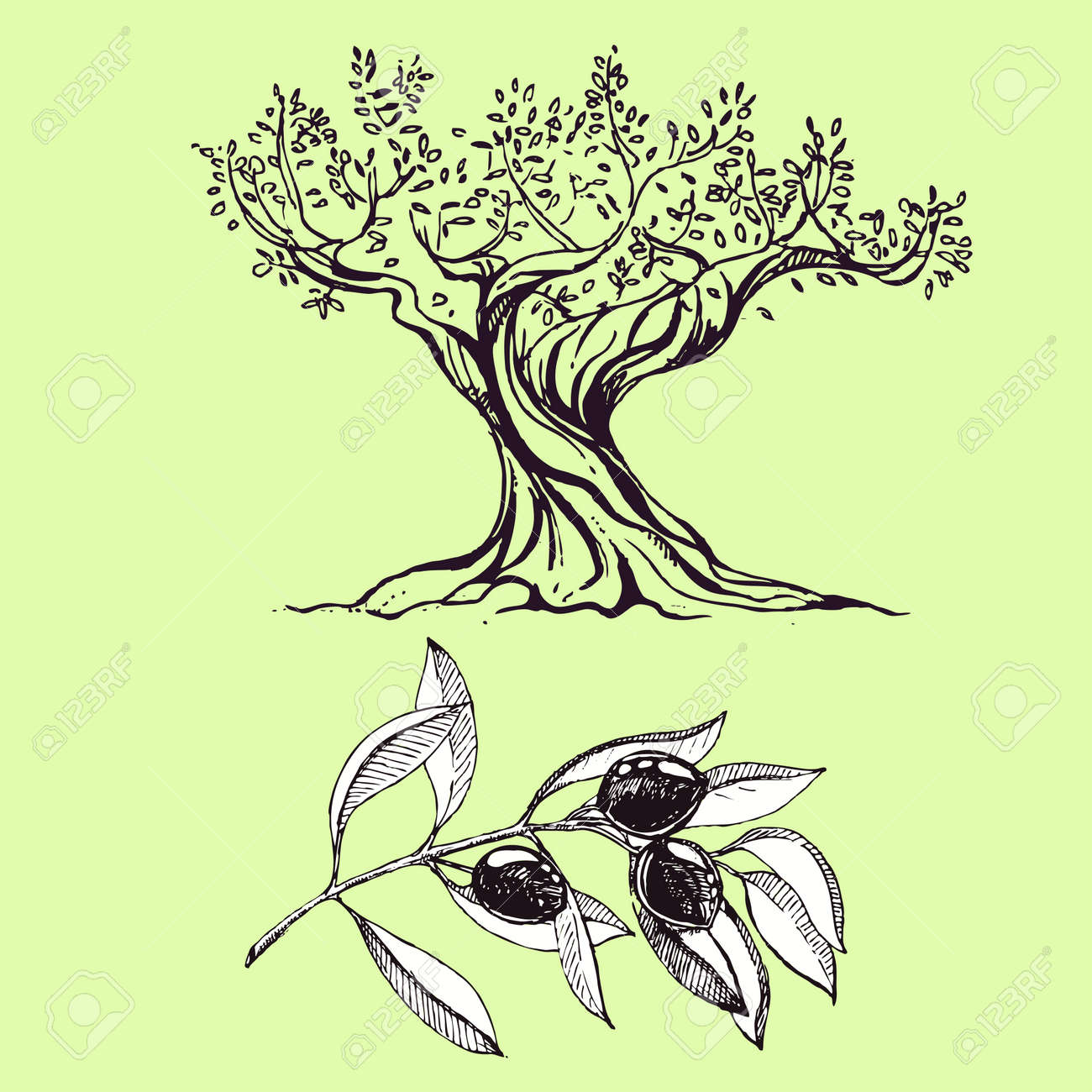 944 Olive Tree Vector Cliparts, Stock Vector And Royalty Free Olive ...