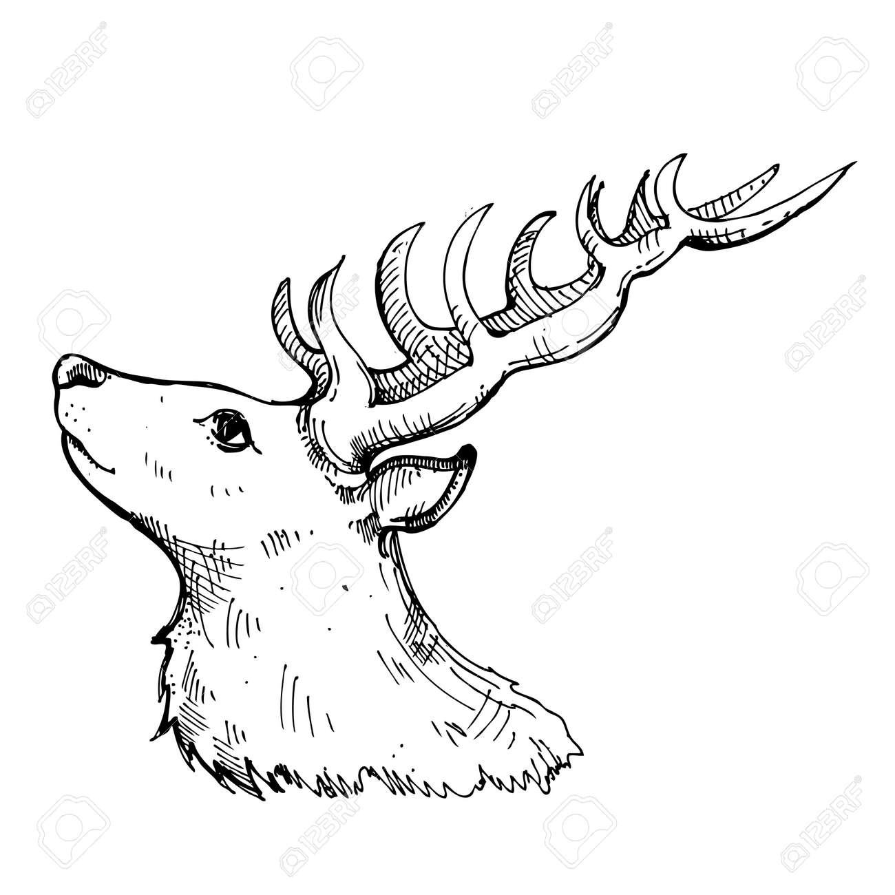 Dibujado A Mano Ciervos Tinta Sobre Fondo Blanco. Dibujo Para ...