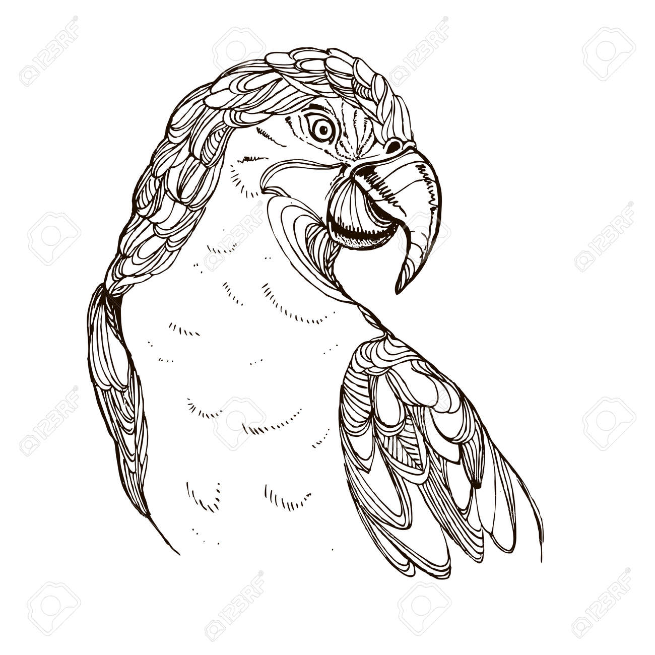 Hand Gezeichnet Tinte Doodle Papagei Auf Weißem Hintergrund ...