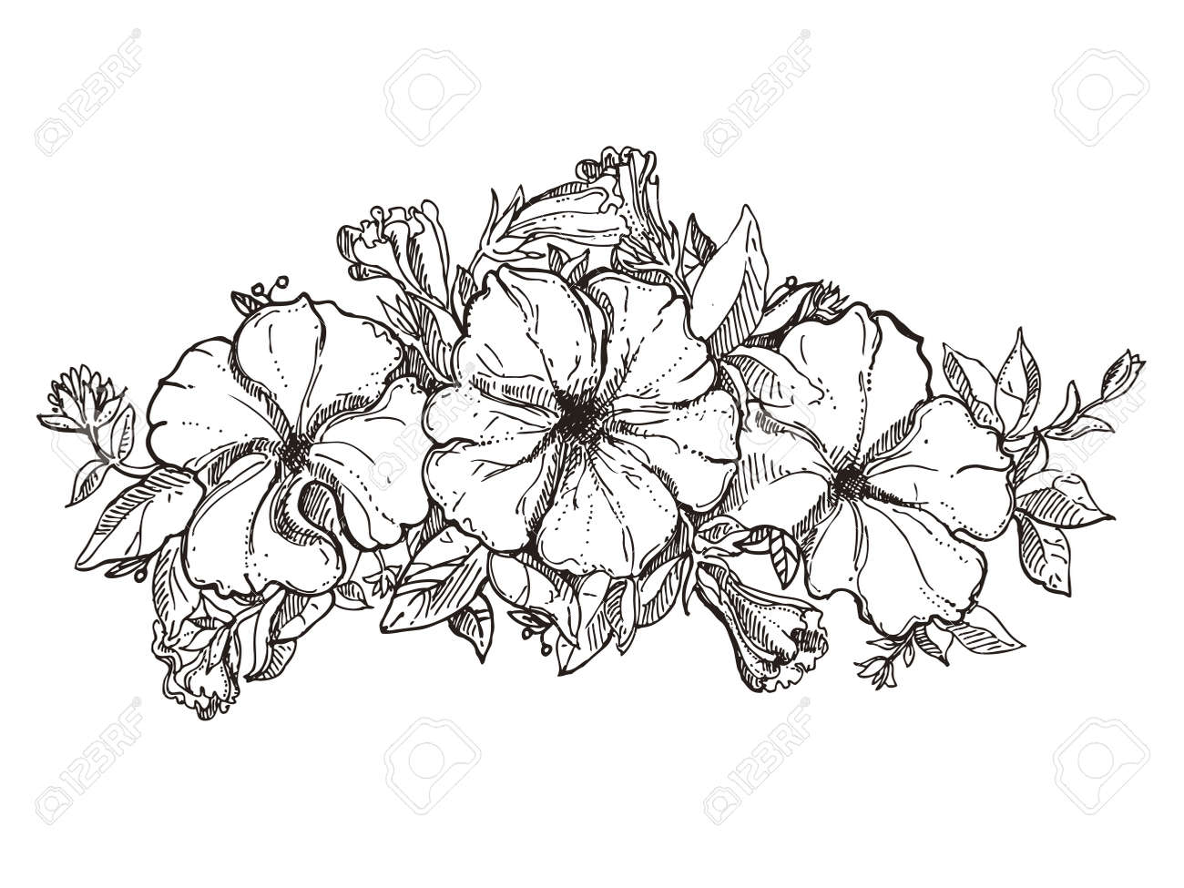Black And White Floral Ornament With Petunia Flower Sketch Royalty