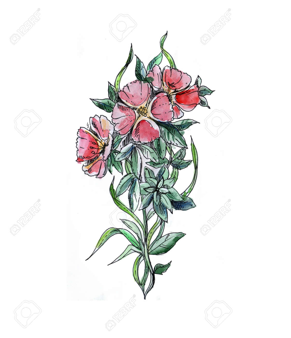 Red Hand Drawn Watercolor Floral Ornament With Godetia Flower Stock Photo Picture And Royalty Free Image Image 67294438