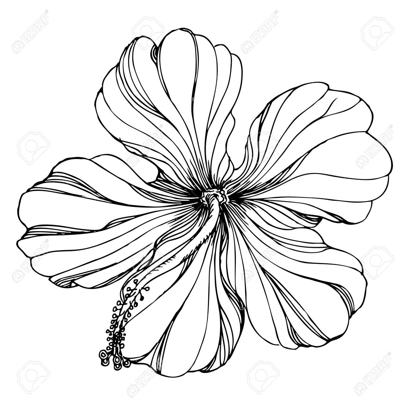 Black And White Floral Ornament With Hibiscus Flower Royalty Free