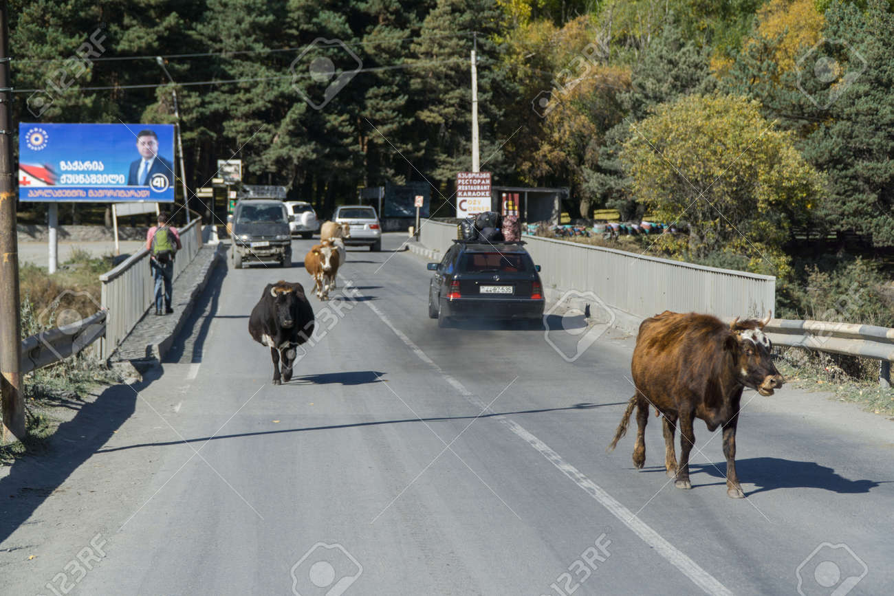 STEPANTSMINDA, GEORGIA - OCT 17, 2016: The bridge, on which there are people, cows, riding cars - 77282295