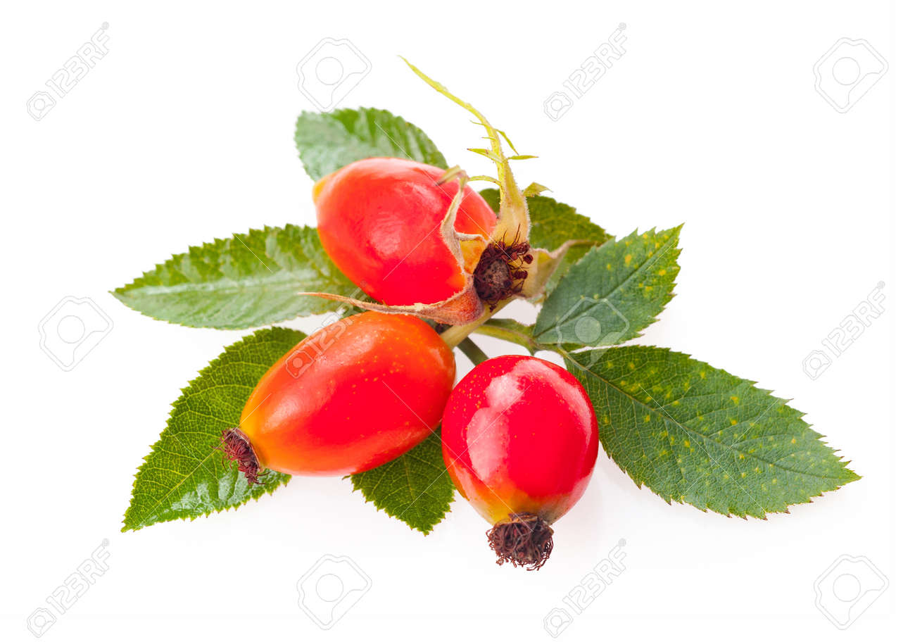 rose hip berry with leaf isolated on white background. - 152731569
