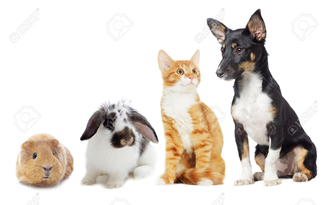 Kitten and Puppy looking on white background - 50594238