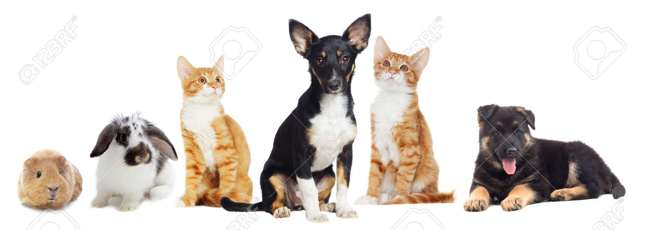 Kitten and Puppy looking on white background - 50594241