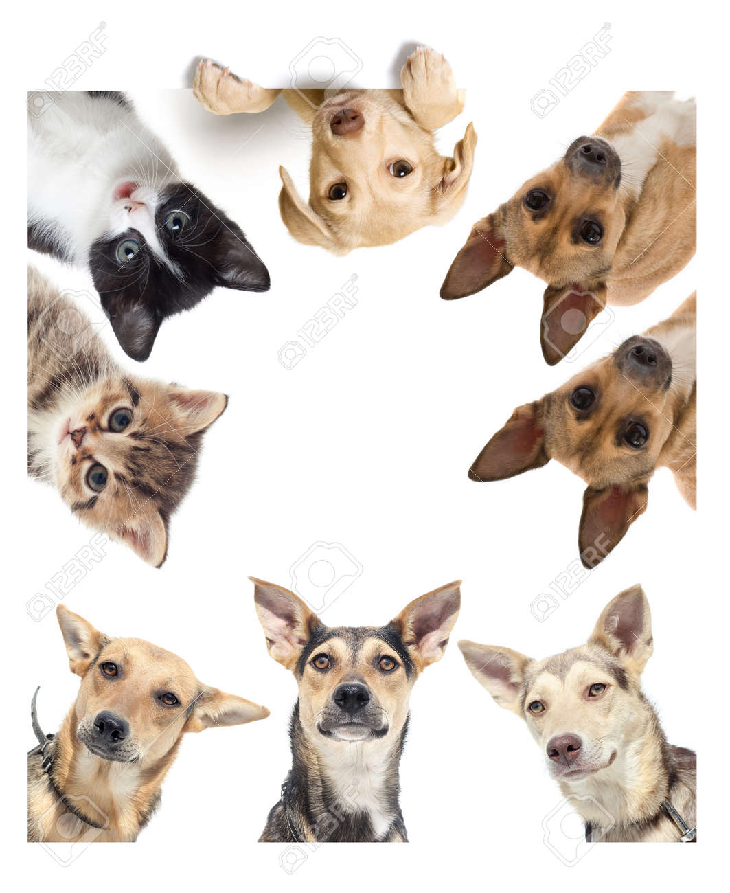 funny dog watching - 50594281