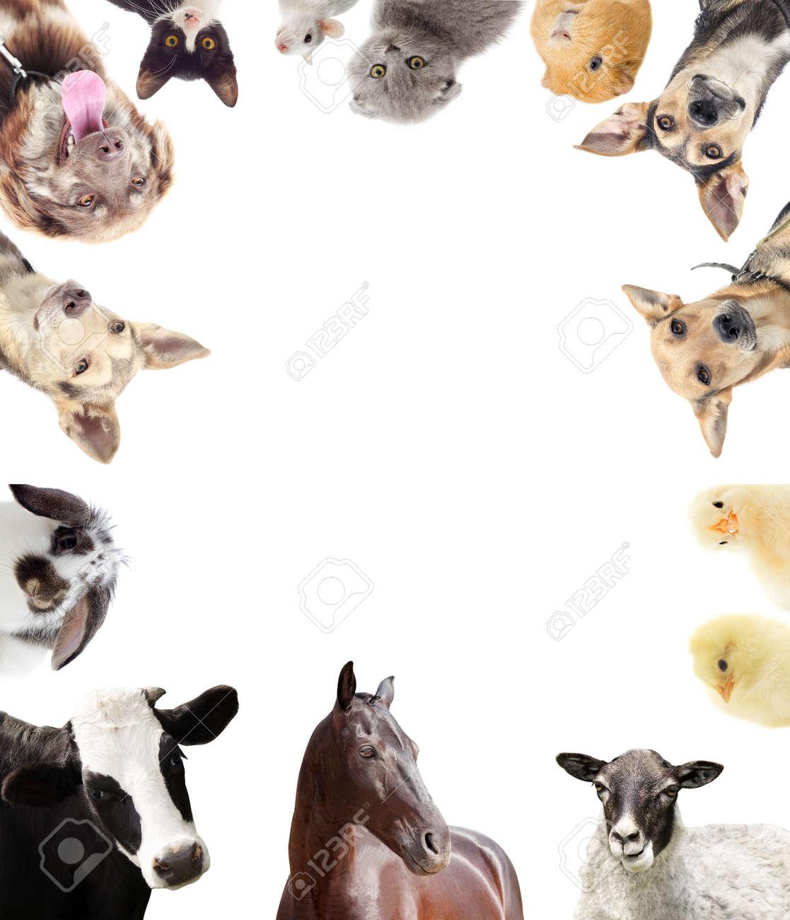 set of farm animals - 50594290