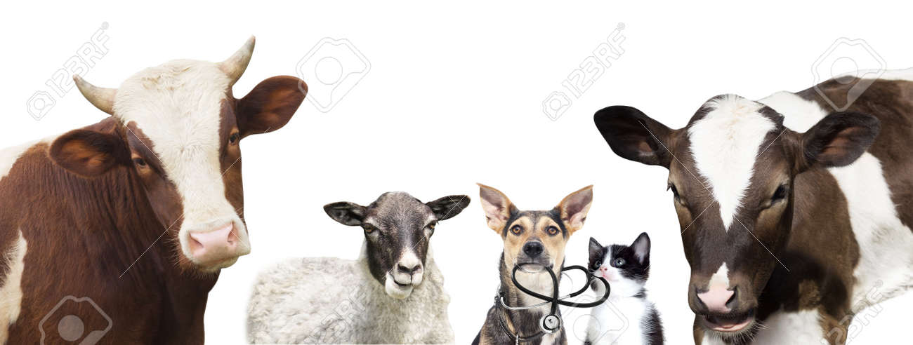 dog and a cat and a stethoscope - 50594294