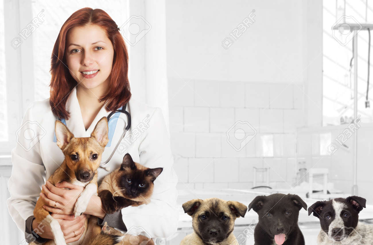 veterinarian and dog and cat at the clinic - 50679716