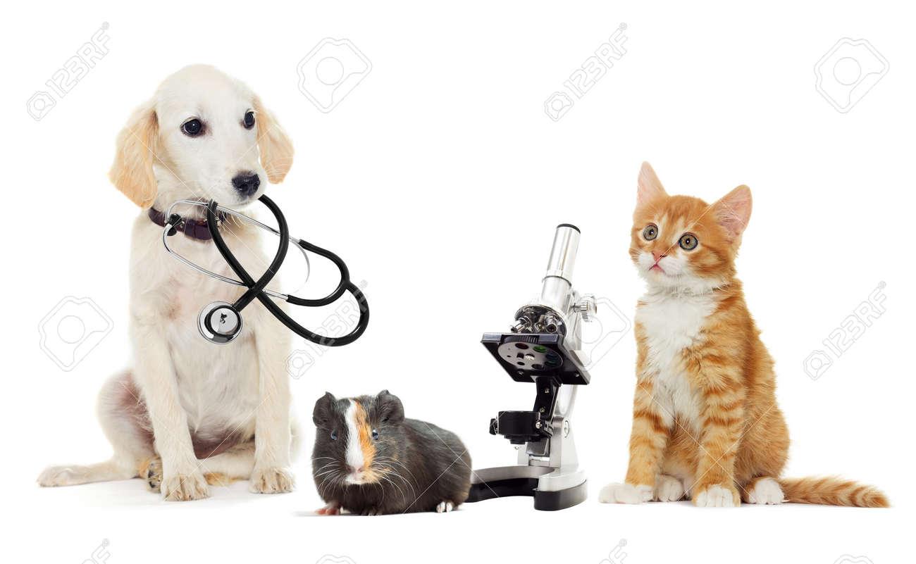 puppy and kitten vet - 50880254