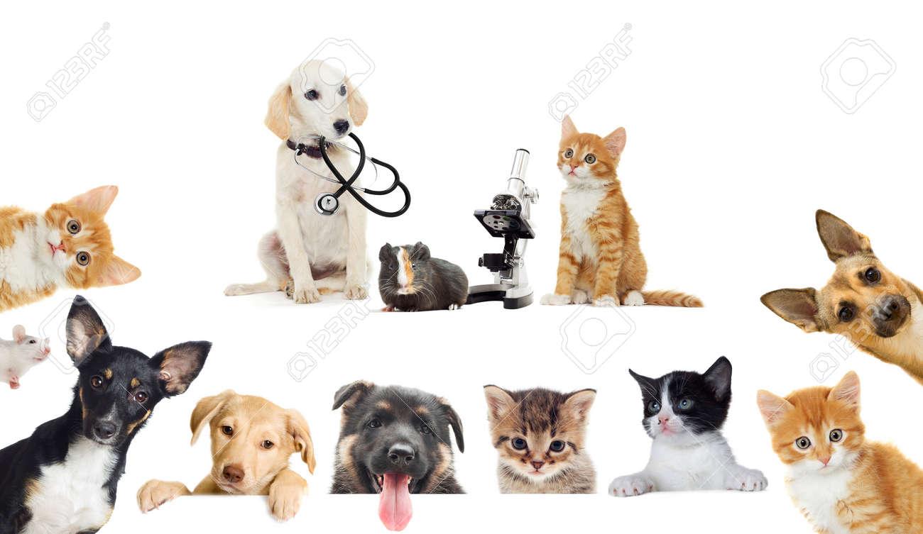 puppy and kitten vet - 50880266