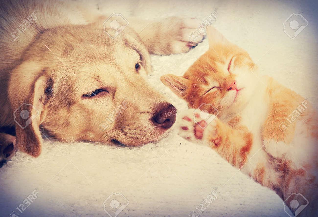 kitten and puppy sleeping - 50880325
