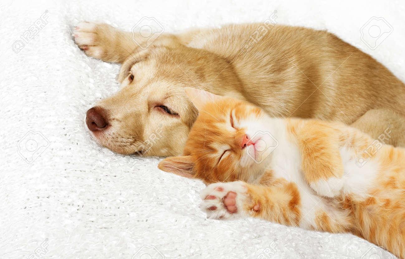 kitten and puppy sleeping - 50880328