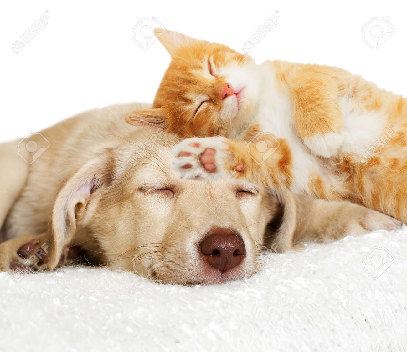 sad puppy lying - 50880332