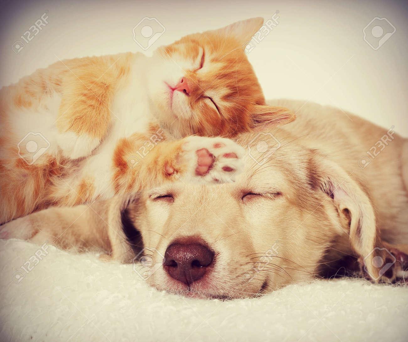 kitten and puppy sleeping - 50880334