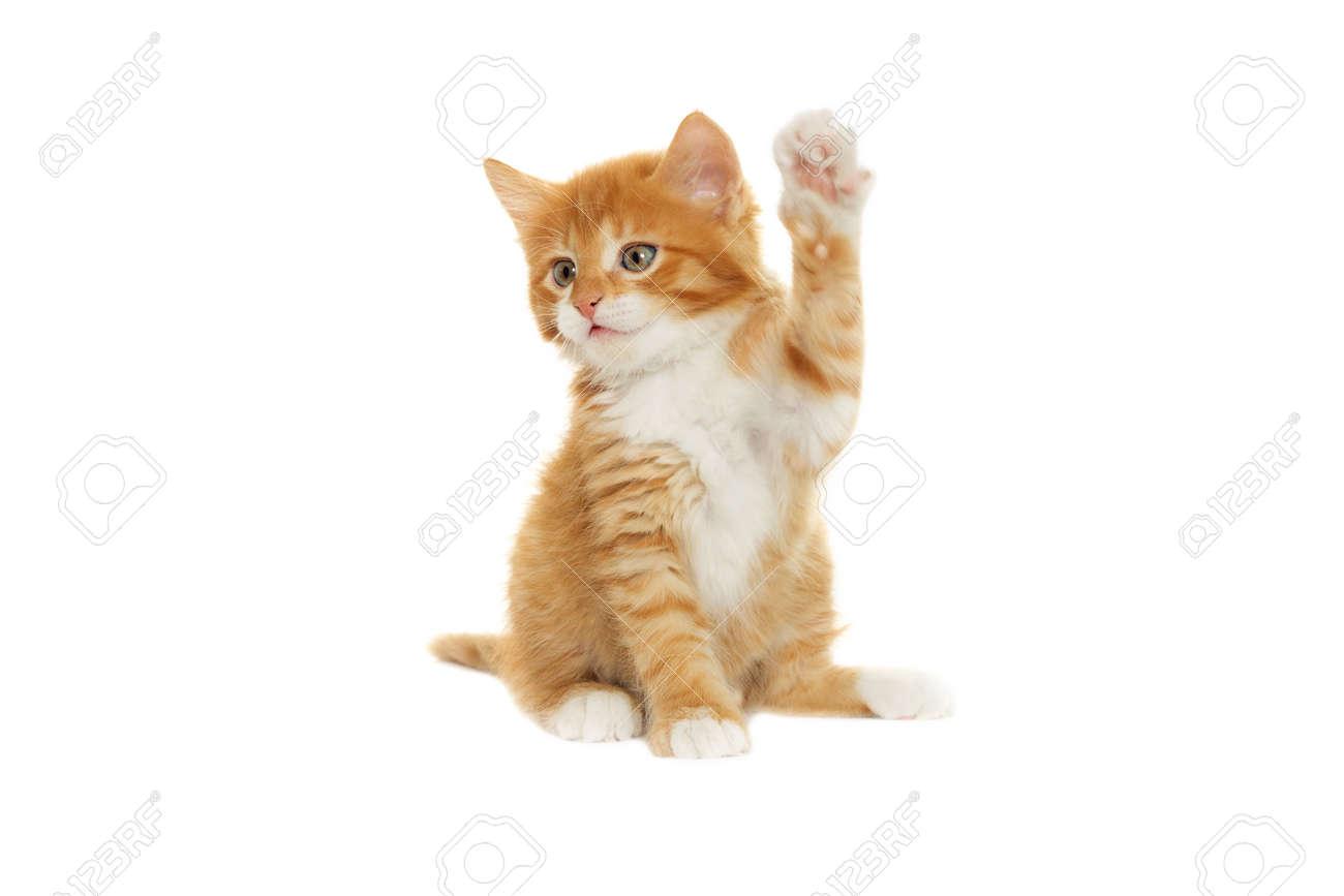 kitten paw raised up - 50880500
