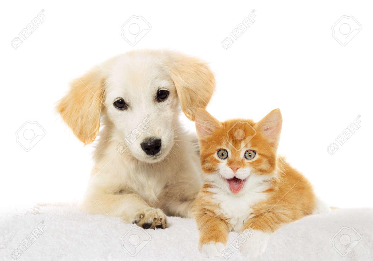 Beige puppy and red kitten watching - 50880602