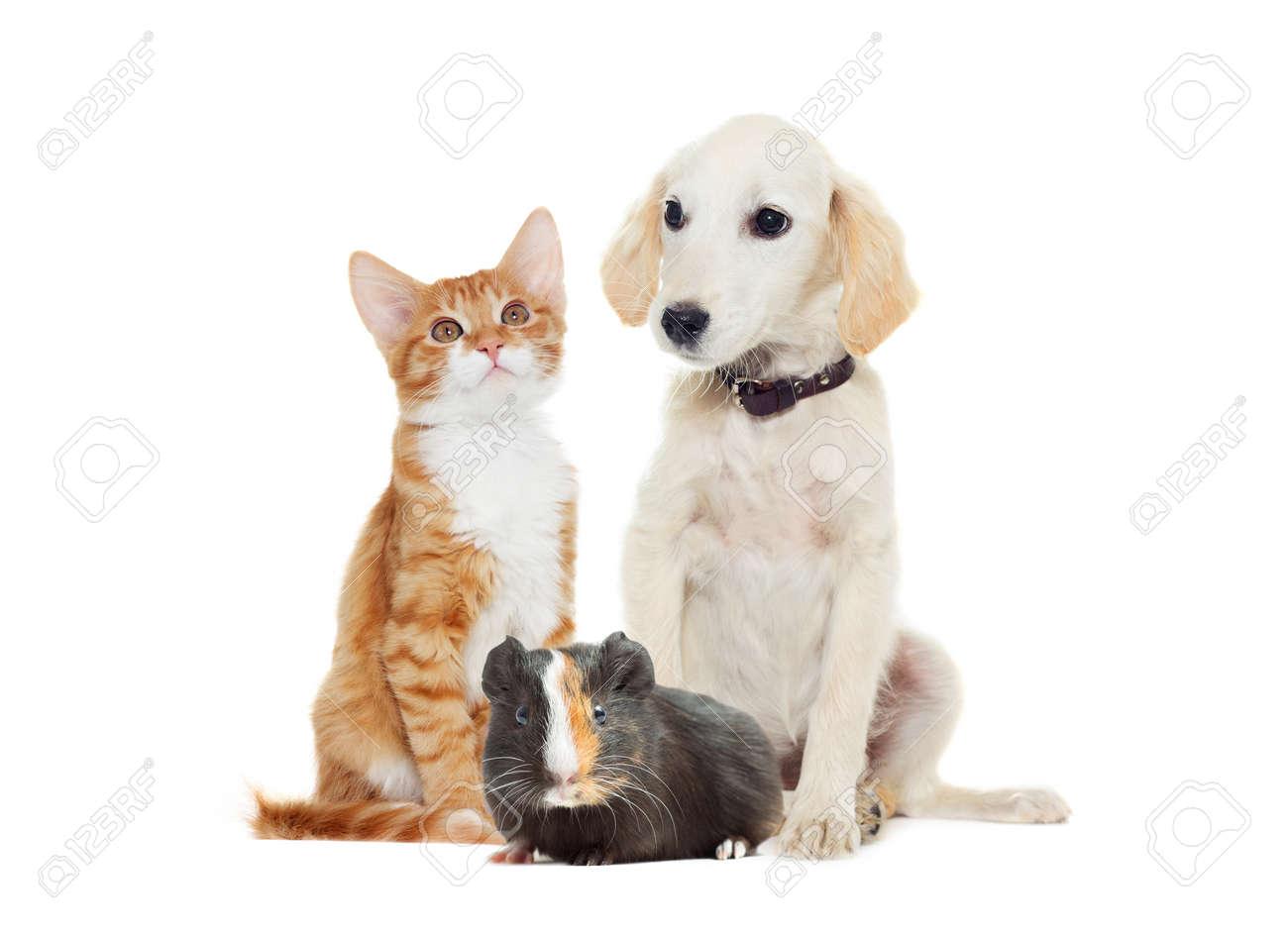 Set pets looking - 50880698