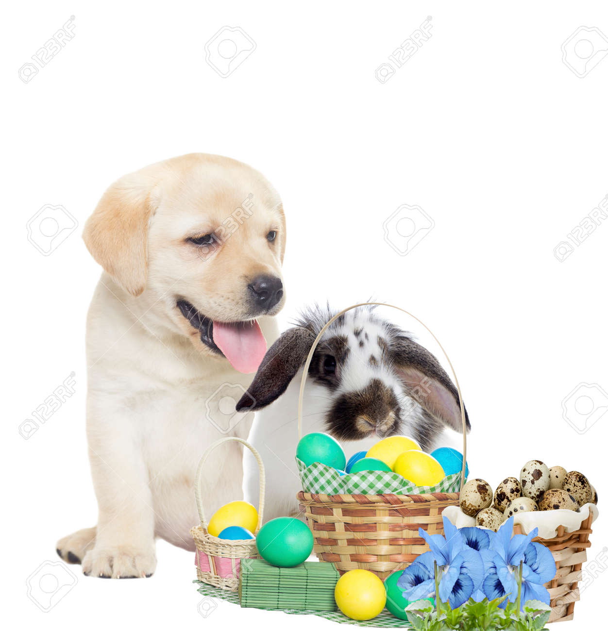 Easter bunny and puppy - 57324050
