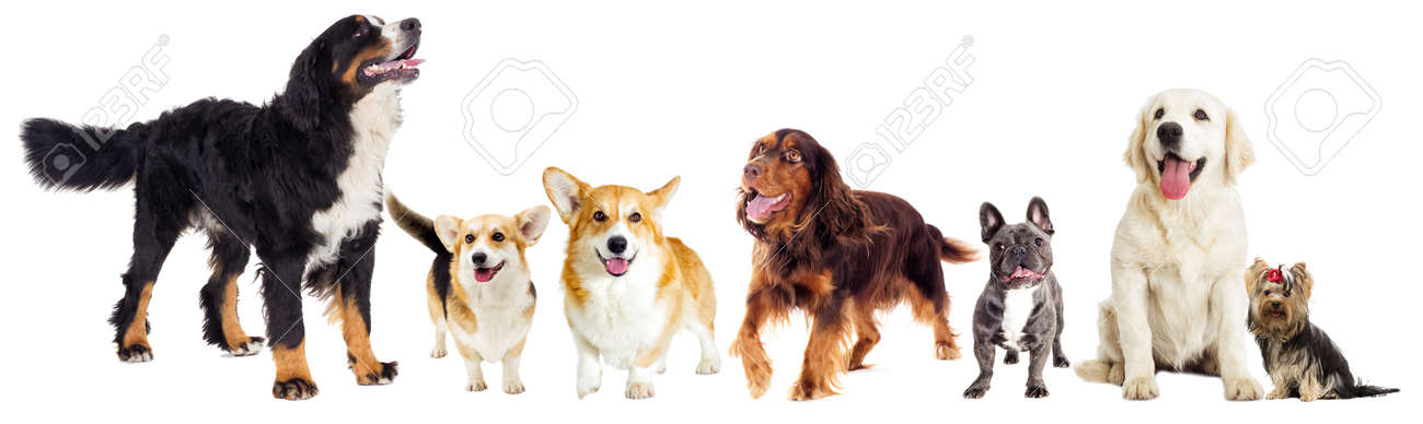 set of dogs - 89490671