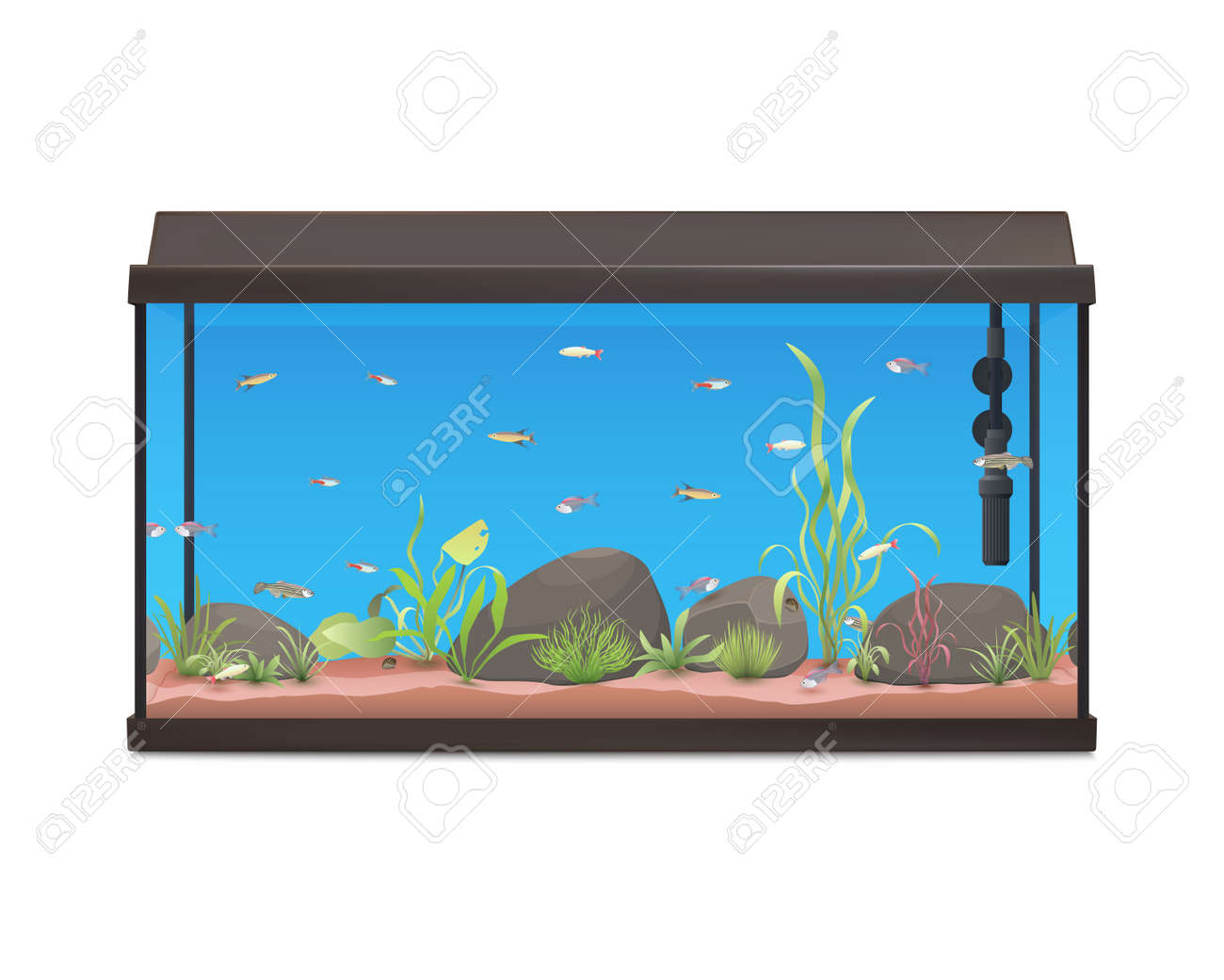 Aquarium Illustration With Fishes Stones And Plants Fish Tank Royalty Free Cliparts Vectors And Stock Illustration Image 58826590