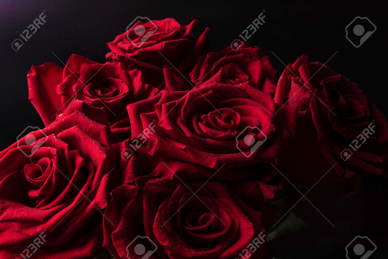 A bright bouquet of lush red roses with clear lines of petals and small drops of water on a black background for a gift. - 130660118