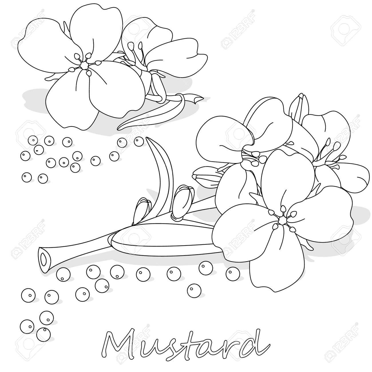 Oil Clipart Mustard Oil - Mustard Flower Png Transparent Png (#2022024) -  PinClipart