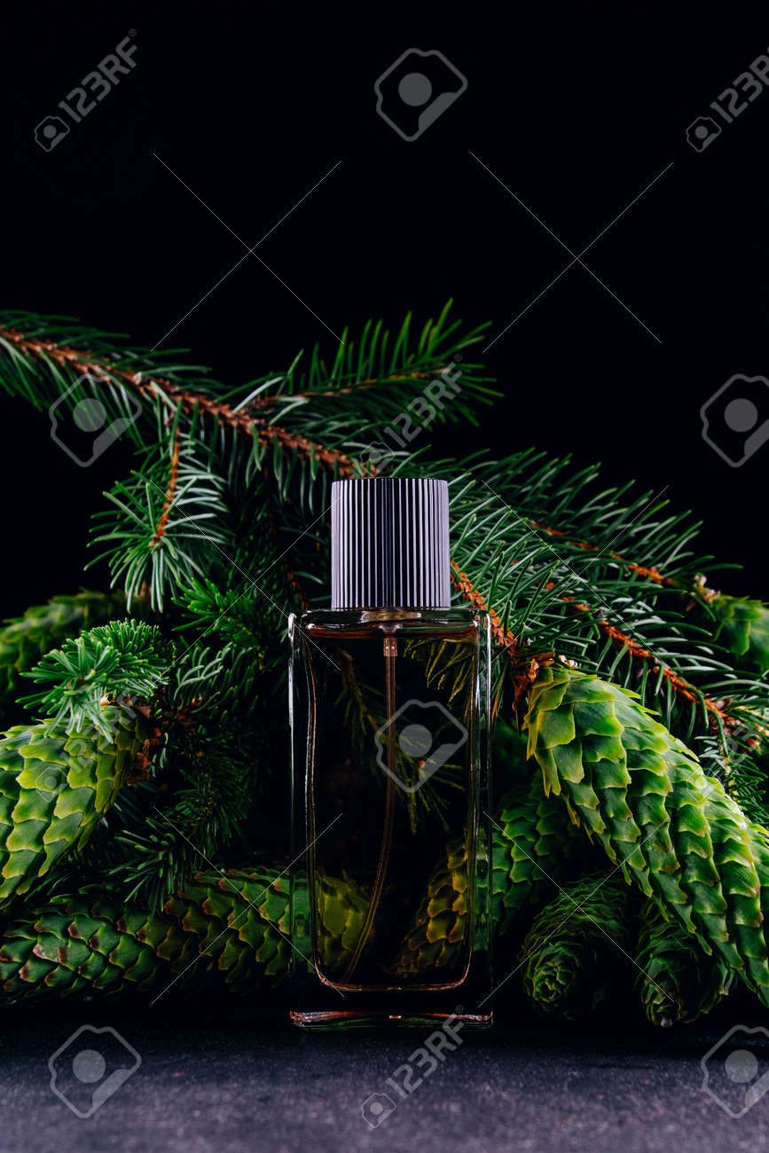 Perfume bottle on the background of pine branches with cones. Smell of Christmas concept - 152811677