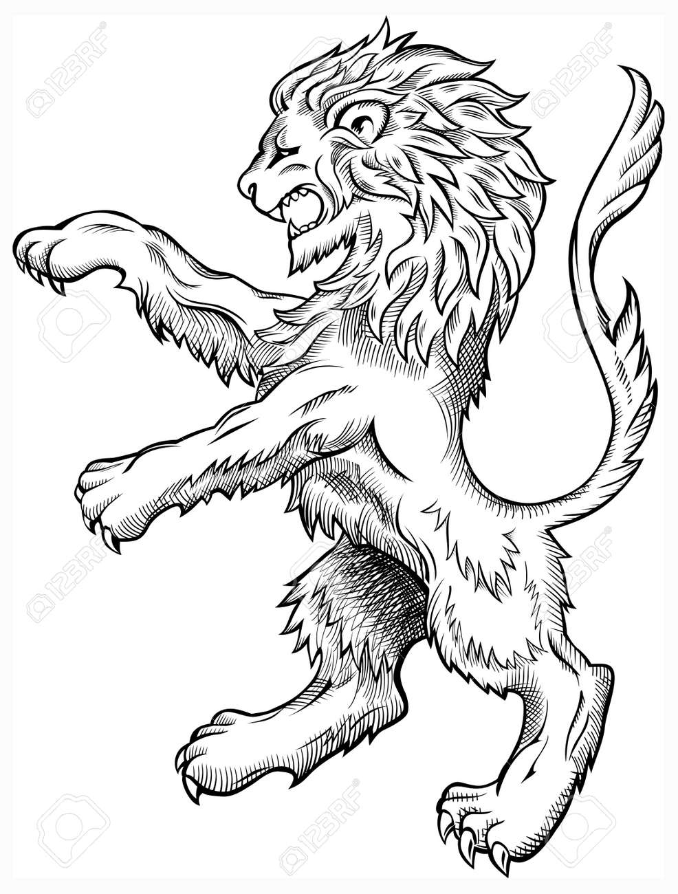Wild Lion Stock Vector - 13026141