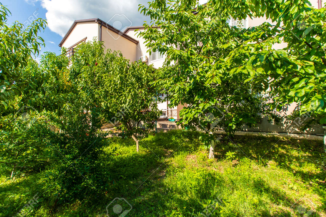The Backyard Of The Cottage Is Full Of Fruit Trees And Green Stock Photo Picture And Royalty Free Image Image 141517550