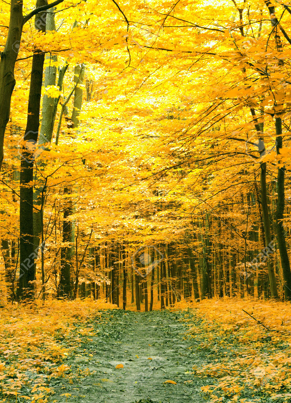 Colorful autumn trees in forest Stock Photo - 10397709