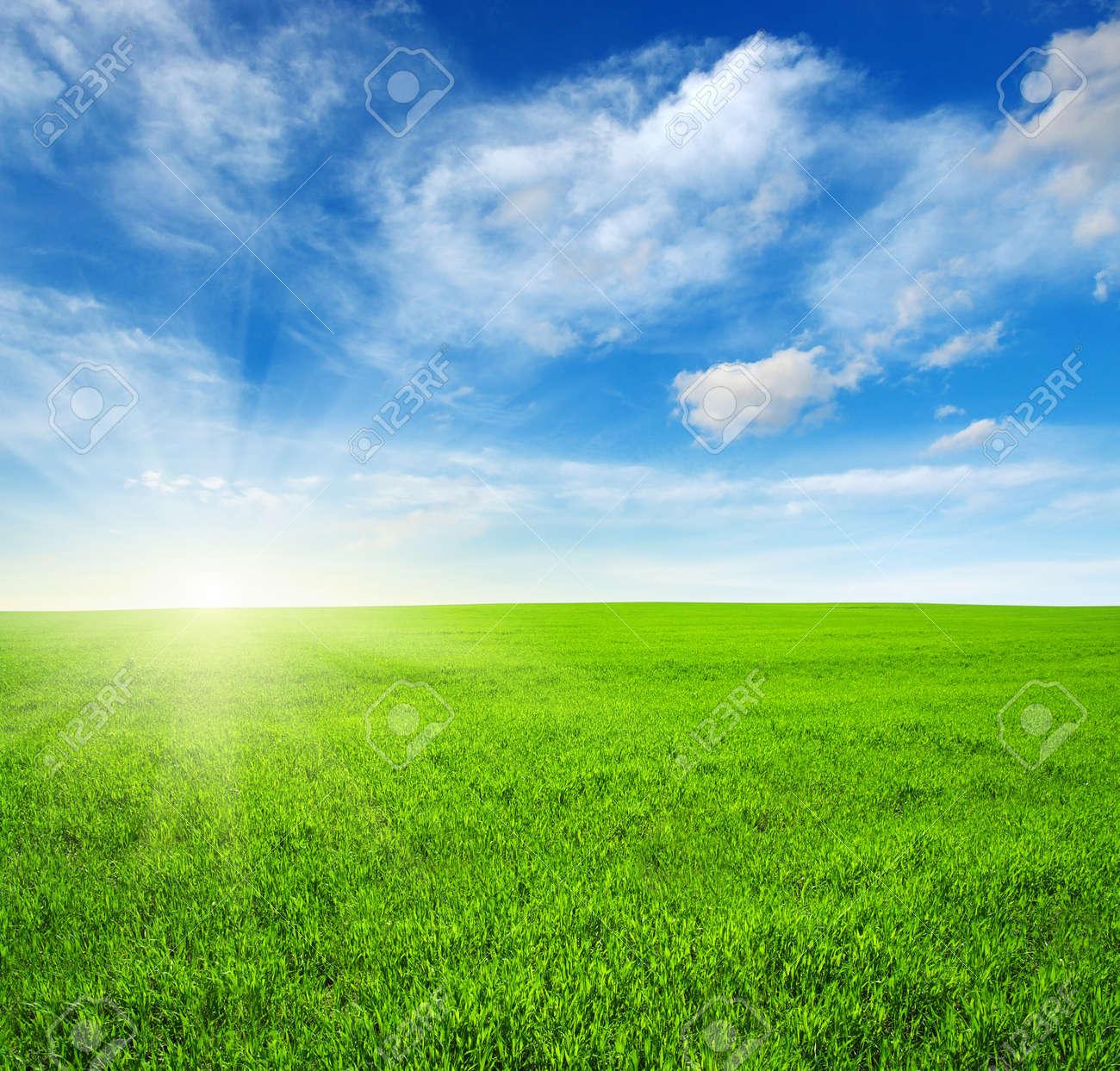 Champ vert, ciel bleu et soleil Banque d'images - 36596960
