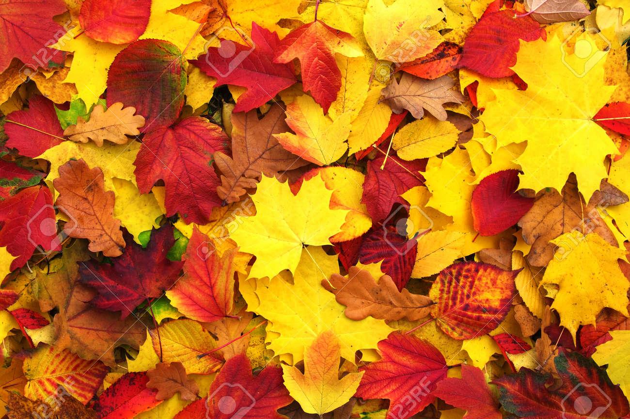 fond de feuilles d'automne tombées Banque d'images - 46050561